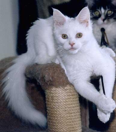 swinburne an eine katze